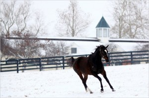 Zenyatta in the snow