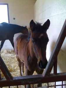 Cutest Leroidesanimaux filly ever?